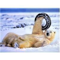 Pneu Artic Ours
