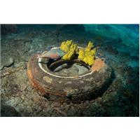 Ocean Pneus